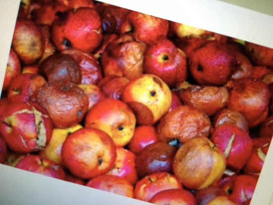 """Workplace abusers: A few """"bad apples"""" or part of a terribly bad harvest?"""